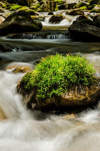 清らかな水がとうとうと流れる芦津渓谷は、鳥取県における大切な水源としての役割を果たしており、「水源の森百選」にも選定されています。