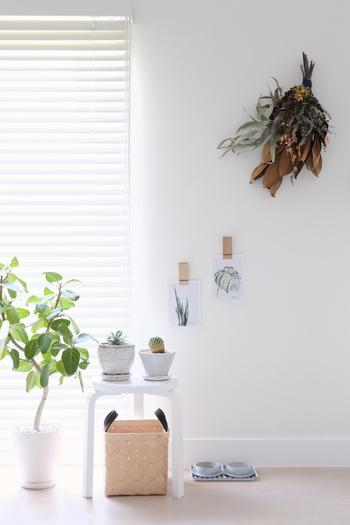 こちらは植物をテーマにしたディスプレイ。壁に飾られたスワッグと共に、植物柄のポストカードを飾ってテーマに統一性を持たせています。ポストカードはスワッグとグリーンをつなぐ役割も果たしています。