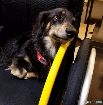 スウェーデンでは犬もバスや電車にリードをつけていれば乗ることができます。ケージに入れる必要はありません。 犬アレルギーの人もいるため、【犬が乗ってもいいエリア】と車両についているマークを確認してから乗り込みます。