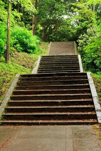 本宮より先、奥社へと続く階段が待ち構えます。さぁ、ここからが勝負! ヒップアップ効果もありそうな、石の階段。長く急ですが、ゆっくり自分のペースで登っていけば、きっと登頂できるはず。  途中、「常磐神社」や「白峰神社」などいくつかの神社が。そのたびに、「やっと着いた?」と喜びますが、階段はその先にも続きます。