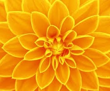 知ればもっと好きになる。季節に咲く花と、素敵な花言葉【秋篇】