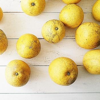 すこし珍しい果物、日本の温暖な地方で採れる河内晩柑(かわちばんかん)は、その外見から「和製グレープフルーツ」と言われることも。グレープフルーツより酸味が控えめで、果汁がたっぷり。