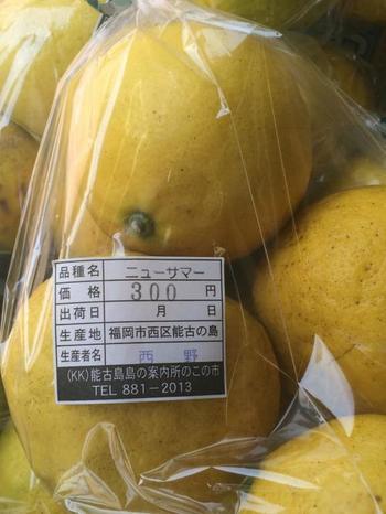 能古島の名産「ニューサマーオレンジ」。皮をりんごのように剥いて、カットしてから食べます。はちみつをかけて食べると、酸味が和らいで食べやすくなりますよ。