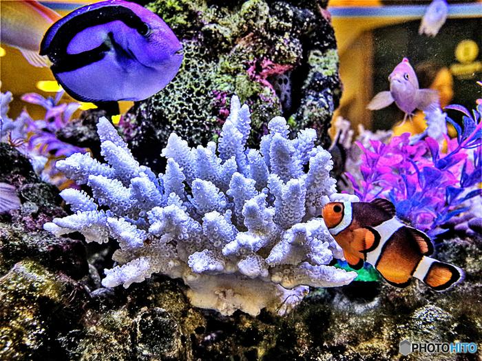 熱帯魚もペット用品店で販売されていますが、水の入れ替えが大変ですので、都市部より郊外のペットショップにいくと沢山の水槽に色とりどりの熱帯魚が販売されています。