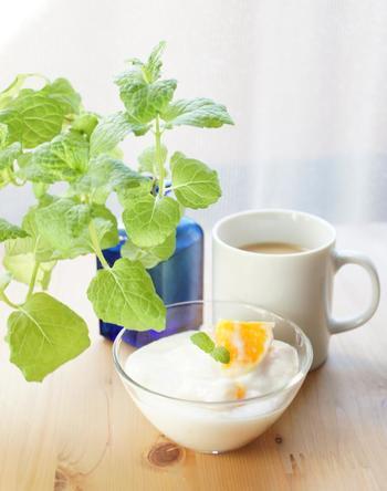 「スペアミント」 ミントの中でも甘味があり、ややマイルドな香りを持っているのがスペアミント。気持ちをすっきりとリフレッシュしてくれ、食欲を増進してくれる効果も。ハーブティーにしたり、カクテルに添えたりと、さまざまな使い方が。寒さに強いため、比較的育てやすいハーブです。