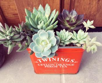 ヴィンテージ加工も! 空き缶を使った植物の植え方・飾り方