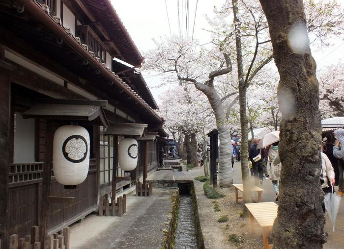 がいせん桜通り沿いにある武家屋敷、木代邸は江戸時代の建造物で、参勤交代の際には、松江城主が脇本陣として利用していました。
