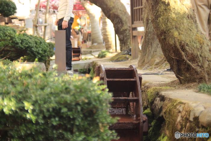 がいせん桜通りのすぐ近くには、清流が流れる小さな水路があります。心地よい水音に耳を澄ませながら、満開に咲き誇る桜を観賞してみてはいかがでしょうか。