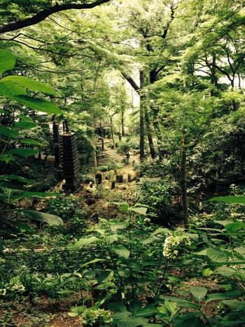 明治時代に建てられた「古経楼(こきょうろう)」などの茶室のほか、ところどころに石仏や石灯篭などを配した庭園は、幽玄と静寂が感じられる世界。緑あふれる散策路を、ゆっくりと歩いてみるのはいかがでしょうか。