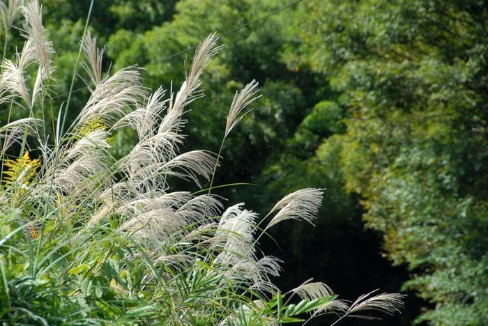【10月中旬の大原・勝林院周辺の集落の風景】