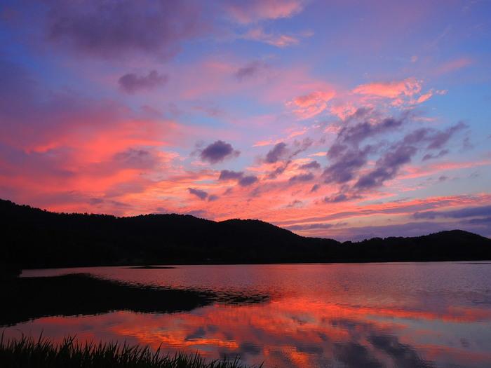 """【「広沢池」は、面積約13ha、周囲1.3km。貯水量は、15万tにも及びます。古くから周辺地域の灌漑用のため池として活用され、池では鯉も養殖されています。  毎年12月の初旬に行われる""""鯉揚げ""""(成長した鯉の水揚げ)は、京都の冬の風物詩。時期になると、鯉や鮒を買い求める人で賑わいます。この行事は、""""池干し""""の一環で、本来の目的は、池の水を抜き、冬中池を干しあげて、池の中を浄化、殺菌することです。太陽光と酸素が池底の微生物に触れることによって、汚泥が分解されていきます。  古くからの知恵ですが、現在は本来の目的の他に、池の水を抜くことによって、生態系を脅かす外来種を除去する役割も果たしています。(画像は、9月初旬の朝焼けの広沢池)】"""