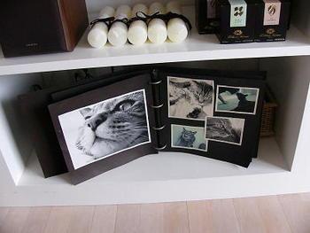 ペットの写真がスタイリッシュに並んだアルバムのディスプレイも、実は目隠し。その裏には……