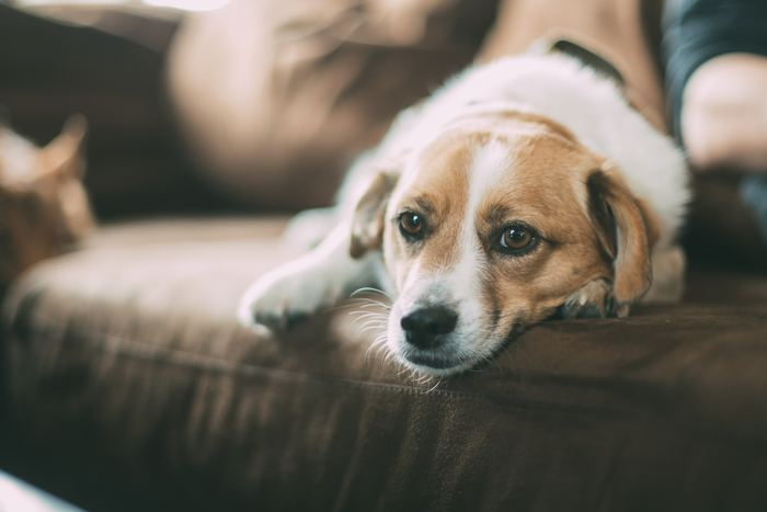 ペットを飼っている人も多いフランス。ペットは癒しを与えてくれる大事な家族の一員です。
