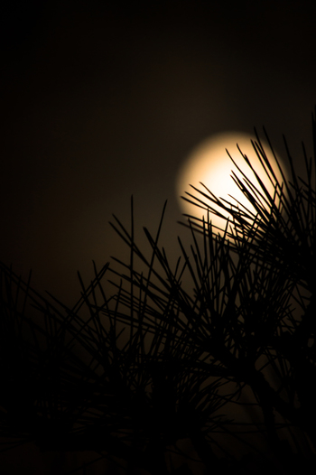 十五夜の月見の慣習はもともと中国から伝わったそう。中国では、中秋節として祝日となっていて、月餅を食べたり、盛大に祝います。ほかにも、香港や台湾、ベトナムあたりでも月見の風習があるそうです。