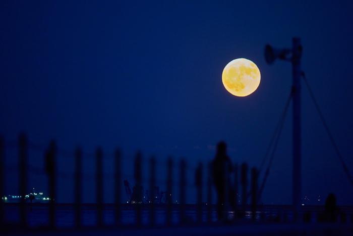 月の通り道の関係で、月が見える高さは季節によって違います。太陽は夏に高く、冬に低いですが、月はその反対です。夏は低く建物にも隠れやすく、逆に冬は頭上近くまで昇ってしまうので眺めるには高すぎるのです。ということで、春や秋の月がのんびり眺めるには最適な位置なのですね。