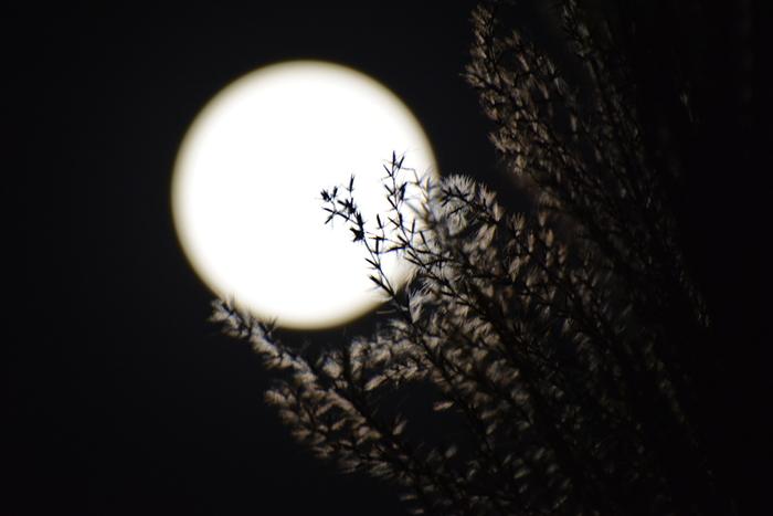 秋といえば、月見ですね。すすき・月見団子・縁側でのんびり眺める…などキーワードはたくさん出てきますが、すべてを準備するのもなかなか大変ですから、お家の中でのんびりと月を眺めながら晩酌をしても良いですよね。それでは、秋の夜長、月明かりの下でのんびり飲みたいカクテルを紹介します。