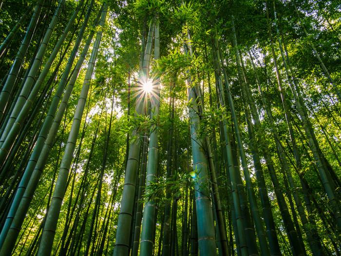 暑い夏も終わりかけ、疲れがどっと押し寄せてくるこの季節、鎌倉にお散歩がてら自然派のレストランで一休みしてみてはいかがでしょうか?きっと、心も体もリセットできますよ。