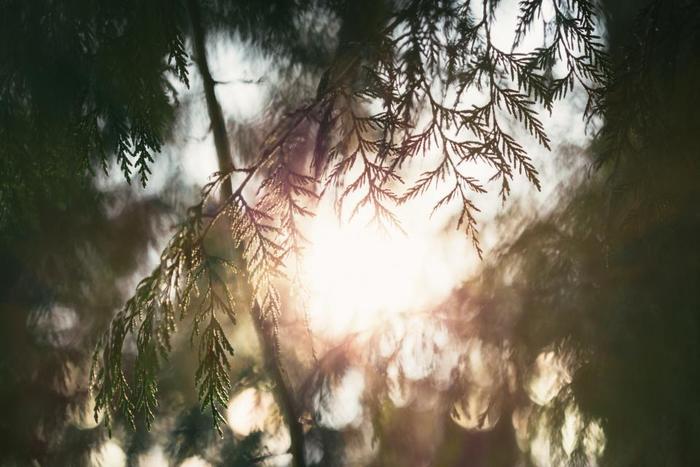 一日の始まりに感謝して、まずは深呼吸。気持ちも前向きになれるはずです。