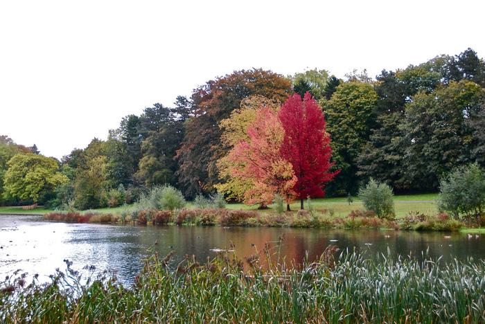 ブリュッセルの東側にあるテルビューレンにある大きな公園には、たくさんの木々が茂り秋には紅葉が楽しめます。