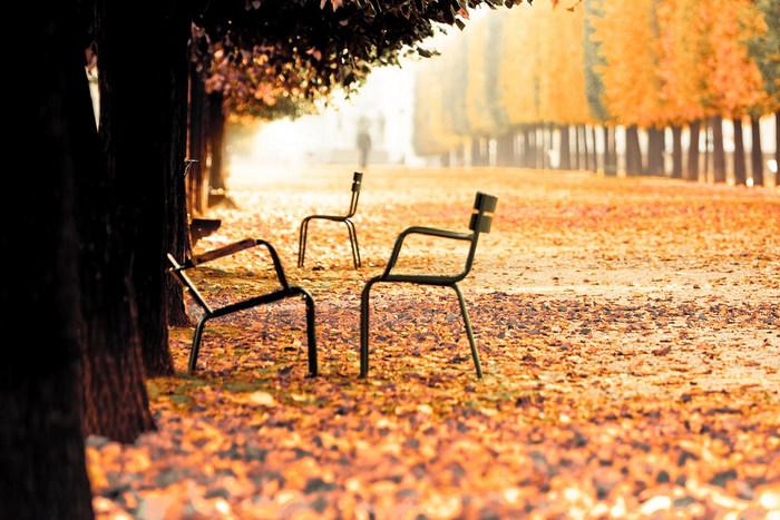 公園の樹木も色づきます。ベンチに座っているカップルも街路樹を歩く人々も絵になるので、フォトジェニックな瞬間が沢山。シャンゼリゼ通りの街路樹の秋色の葉も素敵ですよね。