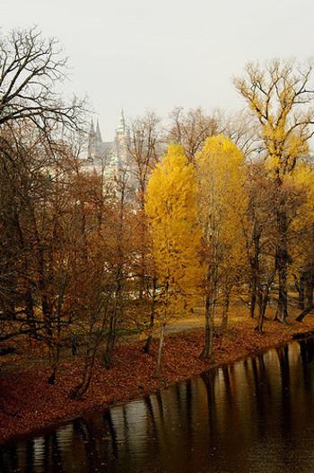 大きめの葉っぱが地面近くまで来ていて、通りを覆っています。その間を通り抜ける道に秋の訪れを感じることができます。