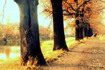 ポーランド南西部の街、ヴロツワフのとある風景。霧がかかって、ほのかにボヤけた黄色やオレンジの葉が美しいです。