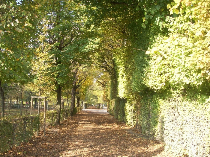 アーチ状にカットされた木々の中を歩いて散策します。宮殿の周りは綺麗に整備されていて、ストレートのラインが出るお手入れが特徴的です。