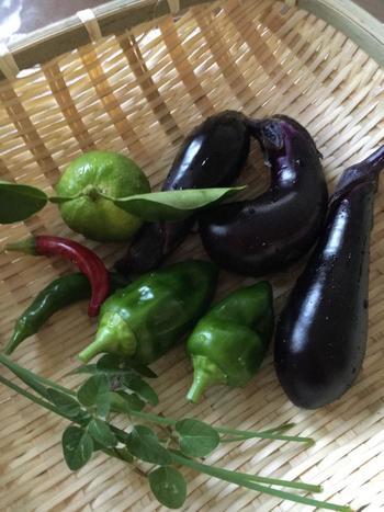 楽しみながらできる食費の節約と言えば、やっぱり家庭菜園。ベランダや庭で育てた野菜は新鮮で安全です。植物が育っていく過程も楽しめます。家庭菜園が無理という方は、産地直売のお店をのぞいてみると安くて新鮮な野菜がいっぱいありますよ。