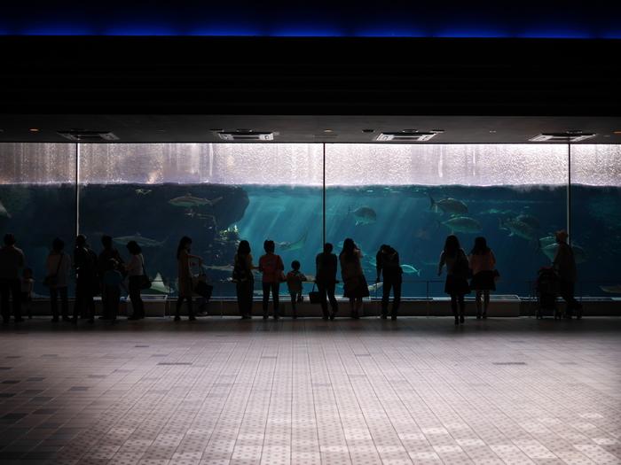 入口を入ってすぐにある巨大水槽。ここでさまざまな魚たちが出迎えてくれます。水槽の中を抜ける「水のトンネル」もあります。