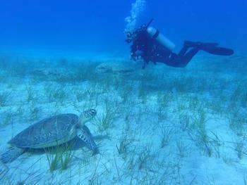 ダイビングとしても有名な地域。英語にはなりますがライセンス取得コースなども豊富です。