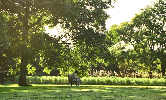 天気の良い日は公園へ。 澄んだ空気の中での読書は、ストレス解消にも◎
