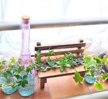窓辺にお気に入りの小さな観葉植物を飾る。窓の外と家の中のつなりを感じますね。ガラスの器に光が透けてとってもキレイ。