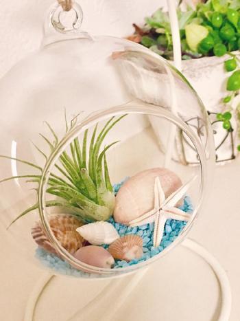 エアプランツをガラスケースに入れて。シンプルで手間要らずのグリーンの楽しみ方ですね。こんな風に貝殻などを一緒にかざってみるのも素敵。