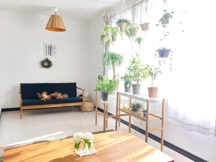 植物を楽しむのに特別なルールはありません。床や棚、好きなところに置いてみましょう。天井から吊るすのもユニーク!自由にインテリアグリーンを楽しんでみましょう♪