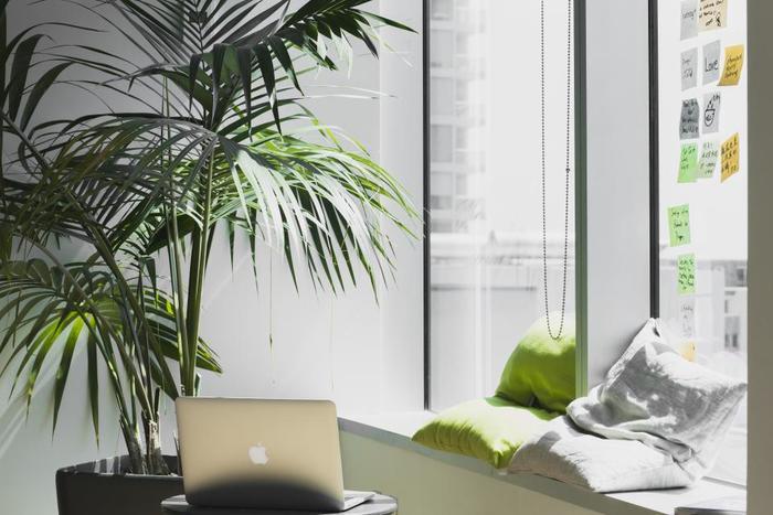 大きな植物は、あるだけでお部屋のアクセントになります。植物と一緒に暮らす、癒しのインテリアを楽しんで。