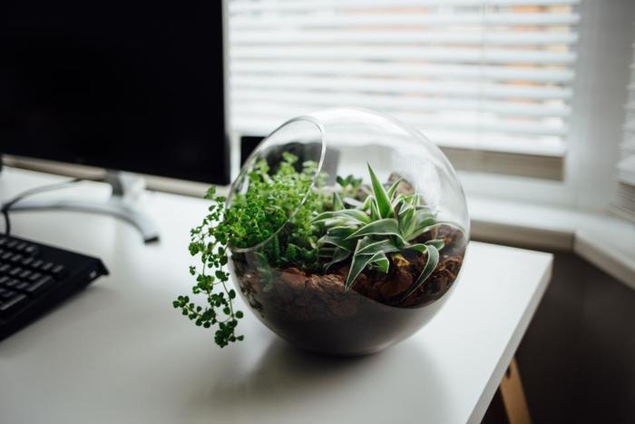 ガラスの透明感を生かした寄せ植え。小さな中にギュッと植物の魅力がつまっています。