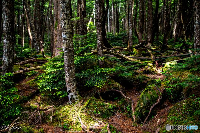 """485種類の苔が生息する「白駒池」には貴重な""""苔の森""""があります。一歩森に足を踏み入れると、緑の絨毯が一面に広がっています。その壮大な景観と美しさは、日本国内でも屈指の場所です。"""