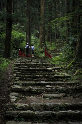 鳳来寺の周囲の森林も選定の対象です。渓流に沿った林の中には豊富な種類の苔が!