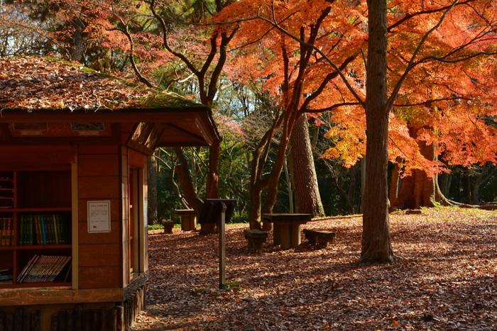 京都御所を囲む京都御苑は、地下鉄烏丸線「丸太町駅」「今出川駅」どちらからでも入ることができます。広大な敷地には大きな紅葉がたくさんあります。イチョウの巨木も有名なので、紅葉の赤とイチョウの黄色、両方一度に見られます。
