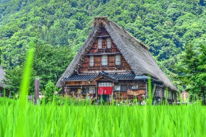 菅沼集落内は、どこか懐かしい雰囲気が漂う日本の原風景が広がっています。急勾配の茅葺屋根で作られた合掌造りの家屋には、豪雪地帯、周囲を山に囲まれた山間部という厳しい環境に耐えるべく、創意工夫が凝らされています。
