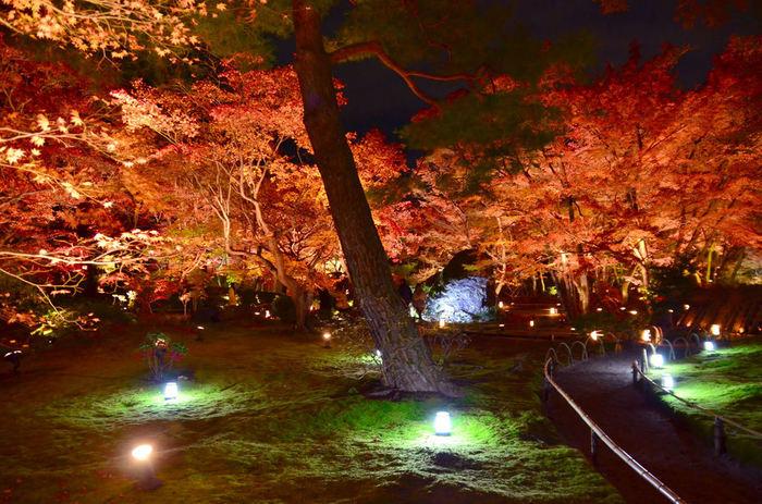 【画像は、秋の夜間特別拝観時のライトアップ。特別公開・夜間特別拝観についての詳細は以下の公式サイトで確認しましょう。
