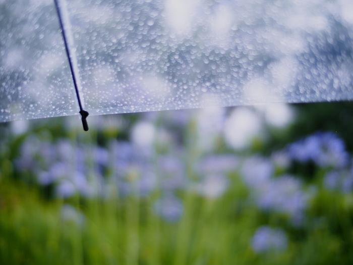 またこの時期は、旧暦では梅雨真っ盛り。雨月(うげつ)、月不見月(つきみずづき)という別称からも、雨模様の日々が感じられます。