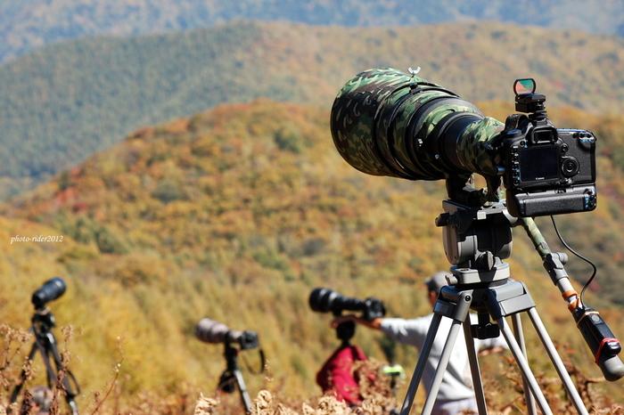 乗鞍高原の一部で、標高約1600メートルの位置にある白樺峠は、「タカの渡り」を見ることができます。