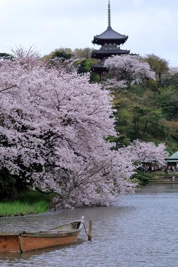 日本庭園と美しい桜が見ものの三溪園。三溪園には臨春閣をはじめ、三重塔など、普段の生活であまりお目にかかることのない重要な建築物と桜を見ることができます。