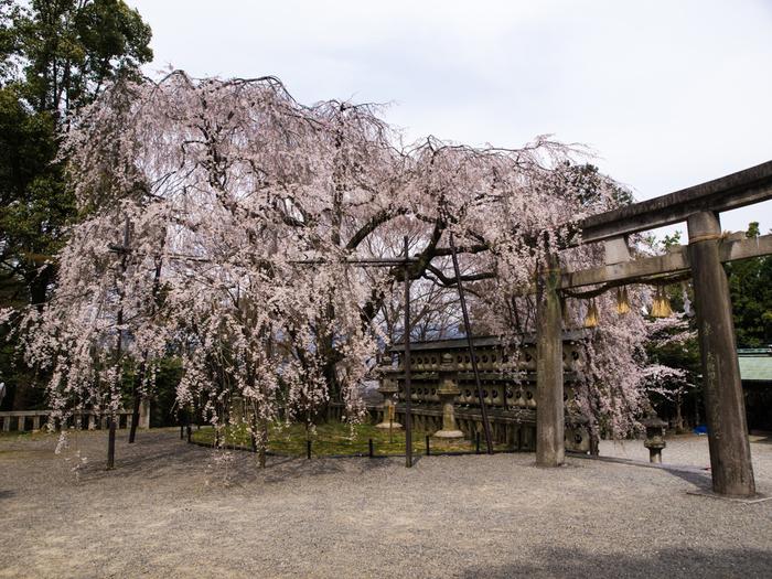 京都市山科区は、忠臣蔵で有名な赤穂浪士、大石内蔵助が隠棲し、討ち入りの義を巡らせていた地です。大石神社は、この地に隠棲していた大石内蔵助を祭神として祀る神社です。