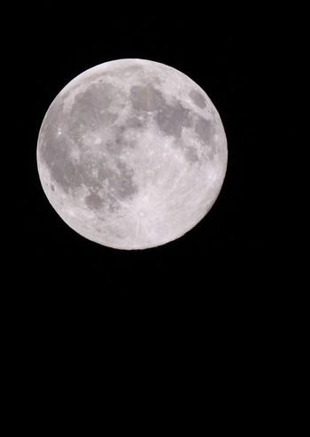 クレーターまでくっきり見える月は、普段とは違う迫力があります。十五夜=満月とは限りませんが、秋の澄んだ空に浮かぶ美しい月を親子一緒に楽しみたいですね。