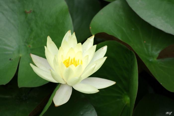 水面に浮かぶとりどりの花を眺めるだけで、幻想的な気分に。ひとときのリフレッシュを愉しんで。