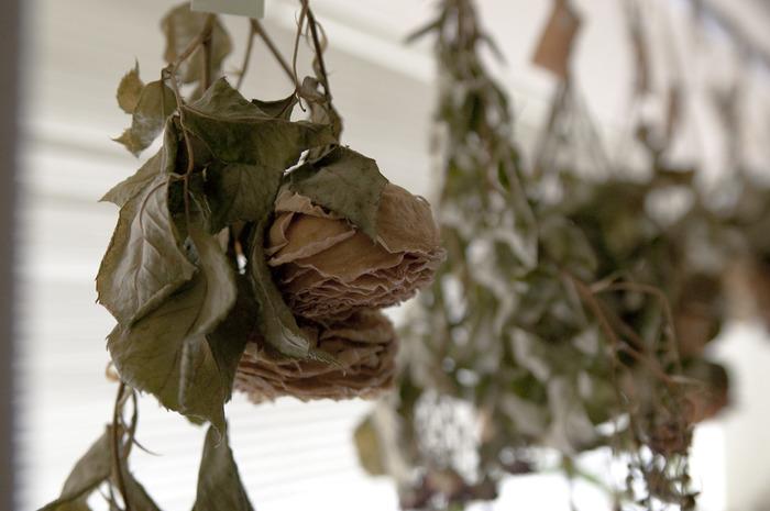 バラの花びらは幾重にも重なってドライになるので、ボリュームが保てます。たくさんの葉っぱをそのままつけた状態でドライにしておけば、ふんわりとしたブーケのようなドライフラワーに仕上がります。