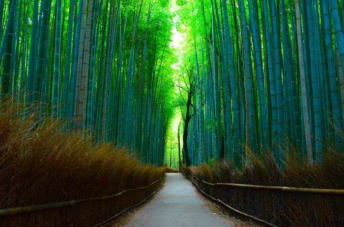 夏の京都。お出かけしたくても、どこに行っても暑さが気になってしまいますよね。そんな時は、夏の京都を味わいながらも、暑さをあまり感じない涼しいスポットに行きましょう!