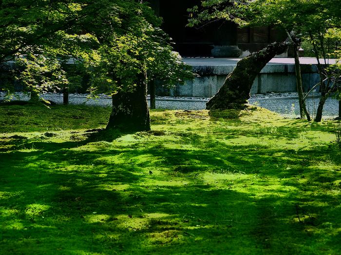 歴史的な景観と苔が美しいコントラストを織り成す貴重な場所、京都。その東山にある一体の寺院などが「日本の貴重なコケの森」に選定されています。こちらは南禅寺の美しい苔たち。